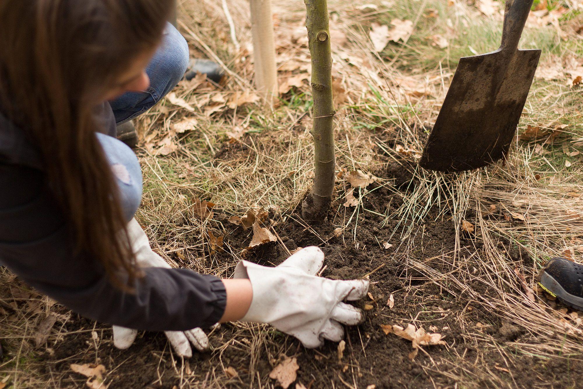 Gira Nachhaltigkeit Projekt Bäumepflanzen